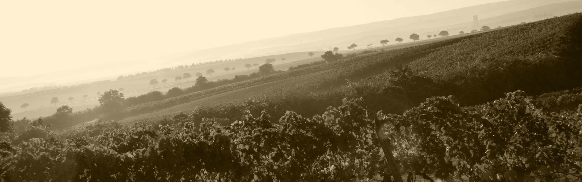 Weinbau Mattes